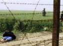 শেরপুরে বিএসএফের গুলিতে ২ বাংলাদেশি নিহত