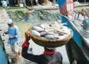 তিন দিনে ভারতে রফতানি হলো ১৯৭ মেট্রিক টন ইলিশ
